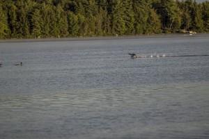 conway-lake-leecamerawork244