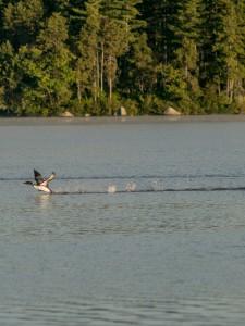 conway-lake-leecamerawork246