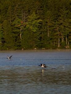 conway-lake-leecamerawork248
